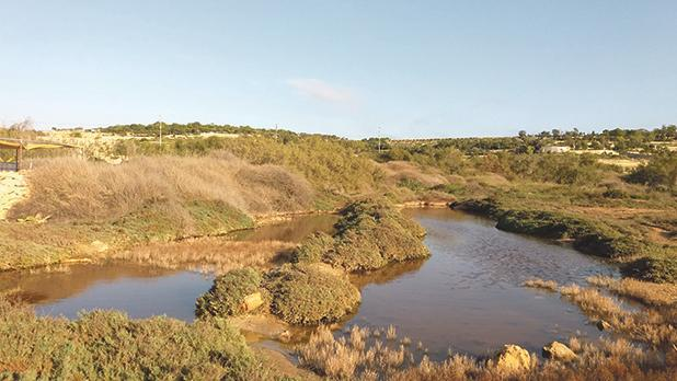 Marsaxlokk wetland to open to public on Sunday – A key refuge for birds
