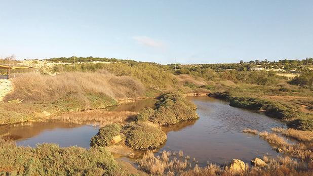 Marsaxlokk wetland to open to public on Sunday – A key refuge for birds